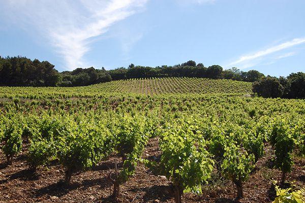 Vignoble Châteauneuf-du-Pape au printemps