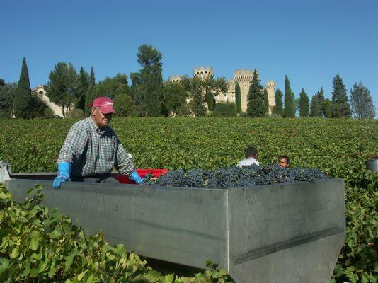 Vendanges Château des Fines Roches