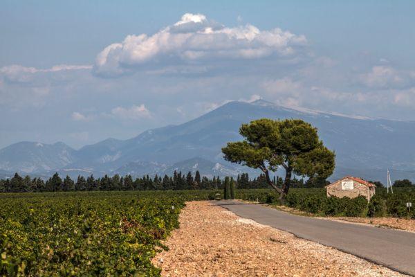 Le vignoble de Châteauneuf-du-Pape - Le Mont-Ventoux