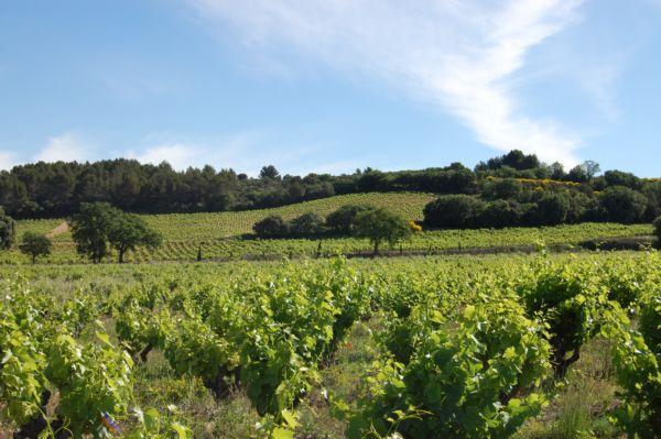 Vignoble de Châteauneuf-du-Pape mai 2017